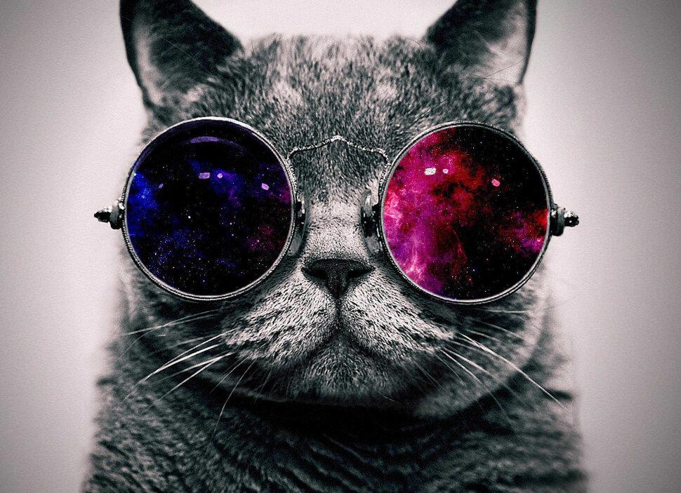 нами картинки на аву четких котов опыт